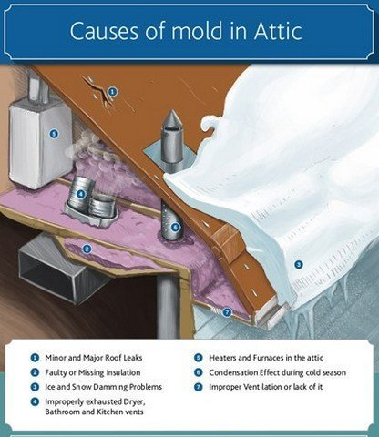 Top Causes Of Attic Mold Growth!