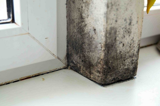 Basement Mold Prevention: 10 Tips