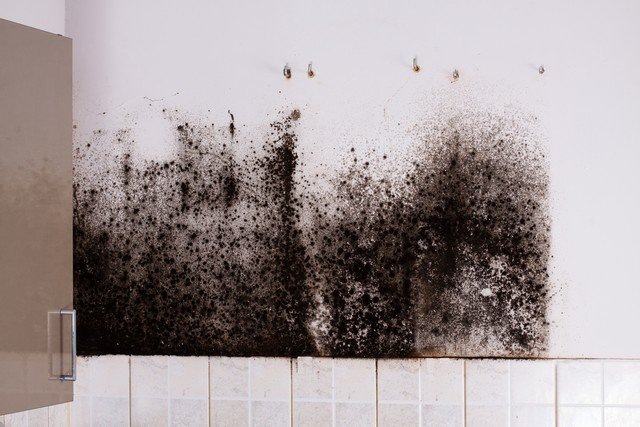 3 Reasons Why Bleach Is Not An Effective Mold Removal Solution!