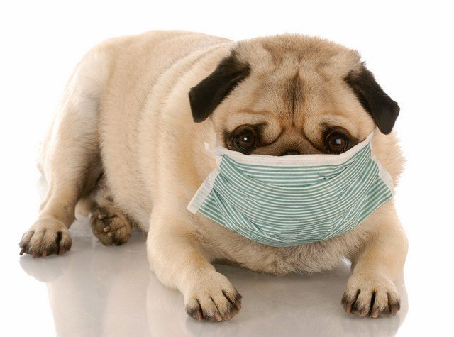 Your Pet Can Get Sick From Mold!