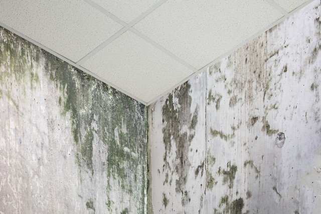 How To Prevent Mold: 10 Tips!