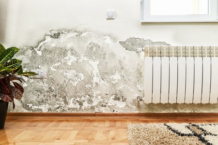 Mold Removal Clinton Twp MI
