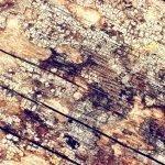 4 Reasons Mold Grows In Attics!