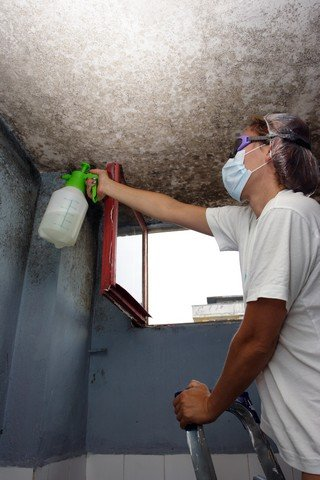 Top 5 Tips To Finding A Professional Mold Removal Contractor!