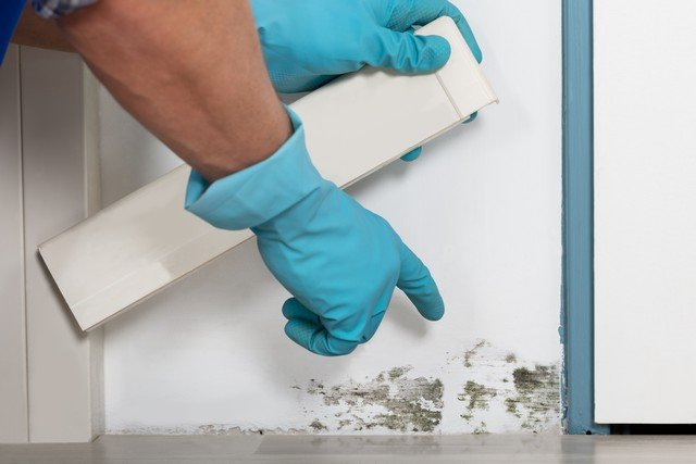 Mold Loves To Feed On Your Home!