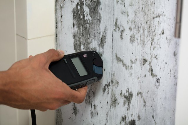 Advanced Mold Services Understands Mold Removal!