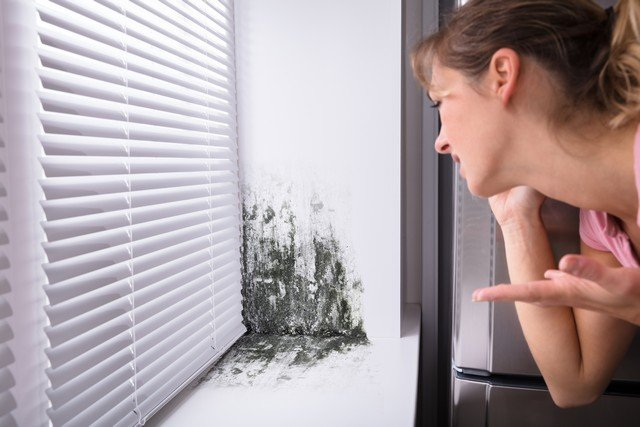 Got Mold Removal Questions?