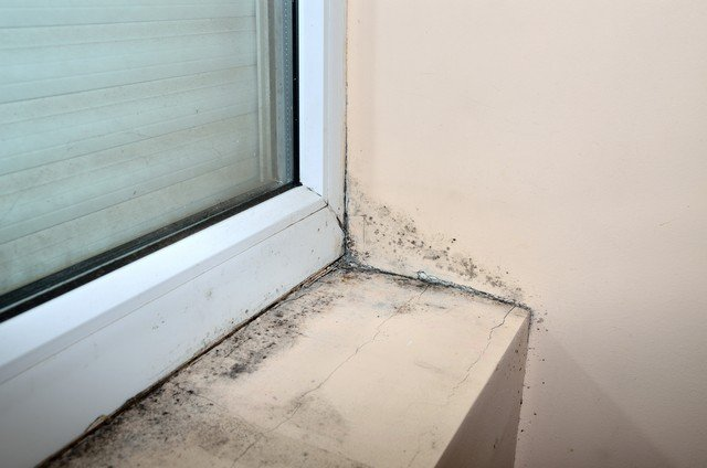 Why Does Mold Grow?